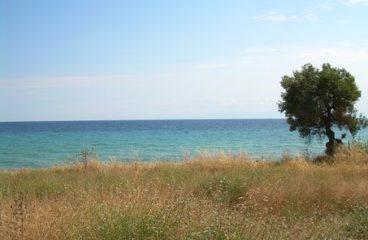 На море: Защо туристите избират да наемат апартаменти и стаи в комплекс Mapy-Holidays?